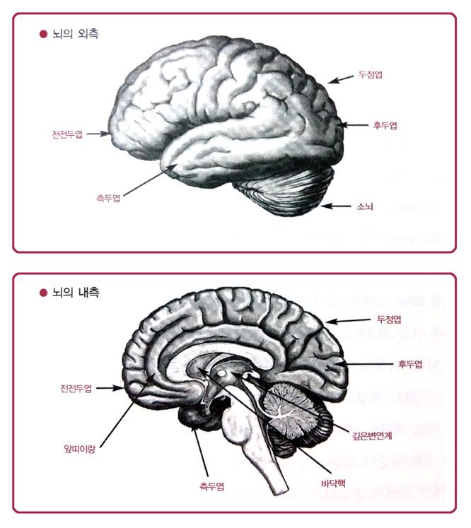 사랑할때 당신의 뇌가 하는 일_뇌에 이상이 있으면 ..