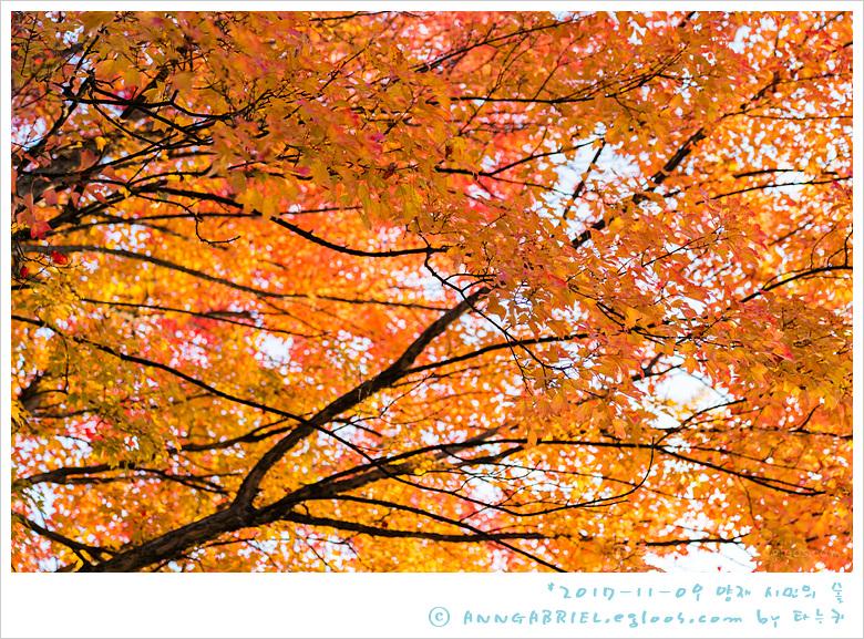 [양재 시민의 숲] 가을 단풍 열전 - 1