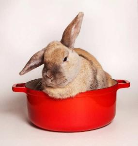 추리 소설 속 요리 (1) : 토끼 스튜