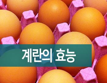 계란 효능 삶은계란 칼로리 및 유통기한