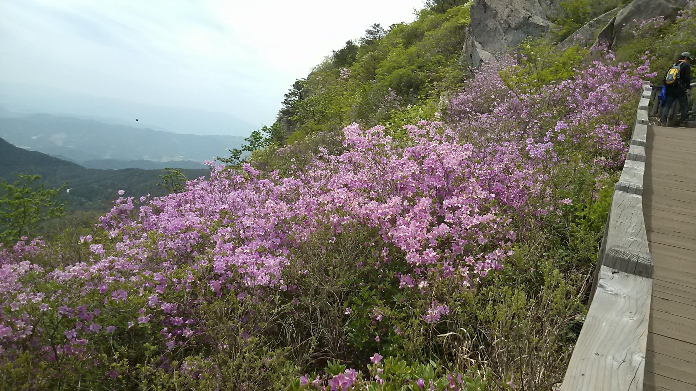 맨드롱 또똣한 평화의 봄
