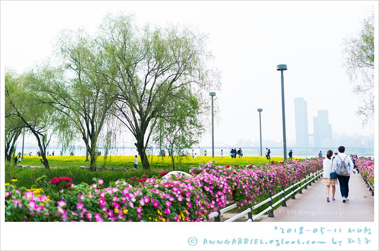 [반포] 유채꽃 가득한 서래섬 나들이