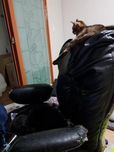 그렇게 의자는 캣타워가 됐습니다.