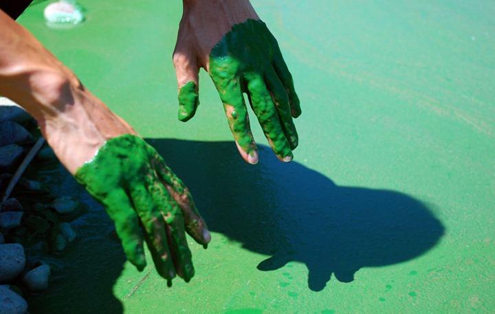 이건 강에다 녹색 페인트를 부었나?