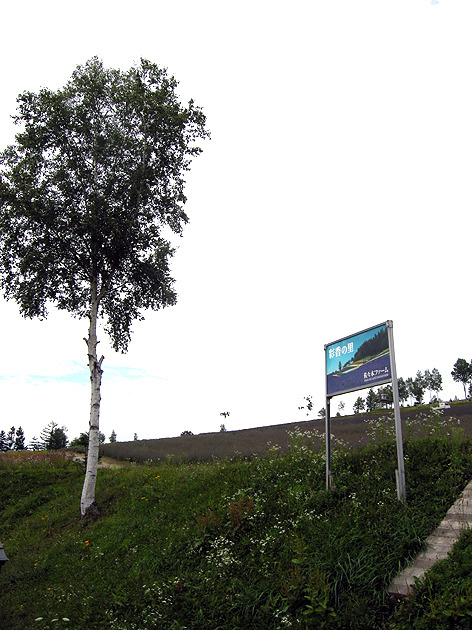 홋카이도 여행: 2. 후라노 사사키팜과 팜 토미타
